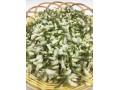 收购野生槐花骨朵,另外收购干净整齐的干蒲公英,带根和花。